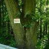 strom_resize