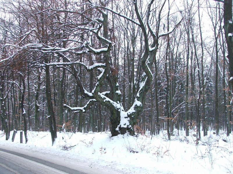 Strom splněných přání – Véska