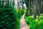 Evergreen pro turisty: trasa Mutkov – Šternberk